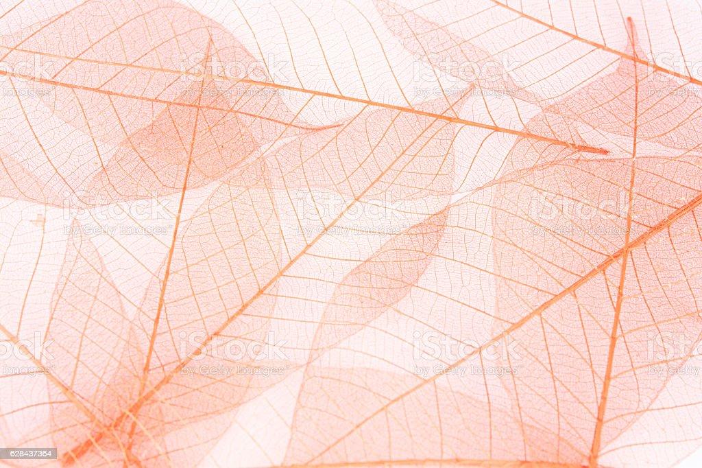 fiber leaf stock photo