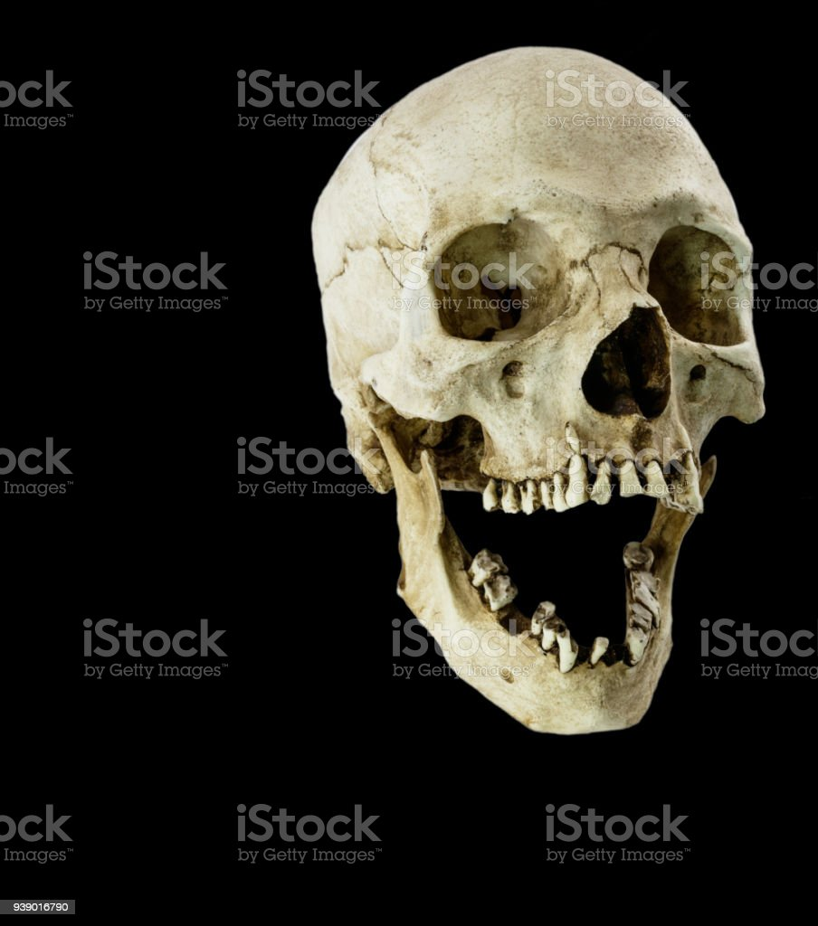 Fiberglass human skull with mouth wide open facing at a 45 degree angle stock photo