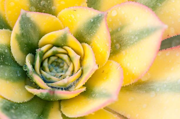 fibonacci - fibonacci pattern stock photos and pictures