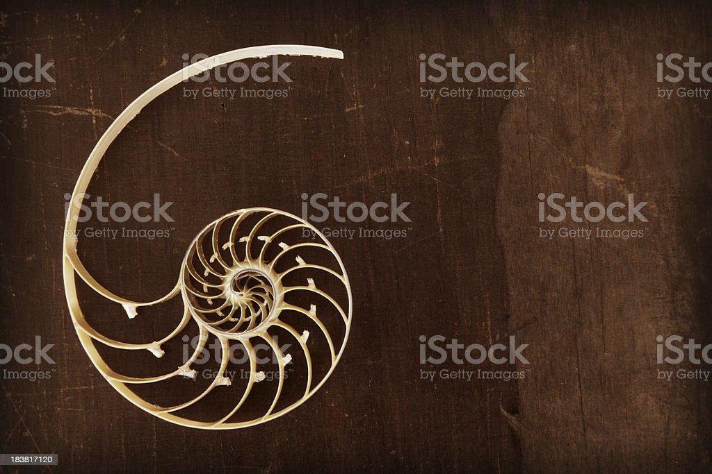 Fibonacci shell stock photo