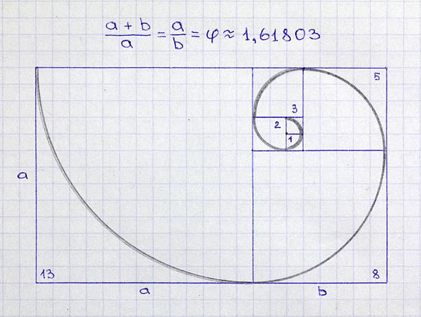 fibonacci спираль - golden ratio стоковые фото и изображения