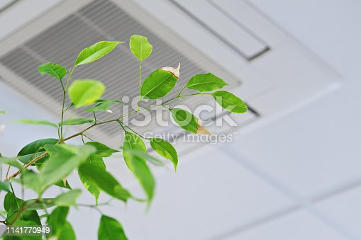 Ficus green leaves on the background ofceiling air conditioner in modenr office or at home. Indoor air quality concept