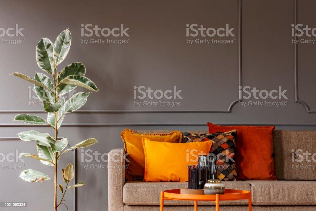 Ficus à Côté Du Canapé Marron Avec Coussins Orange Gris Salon Intérieur  Avec Table. Vraie