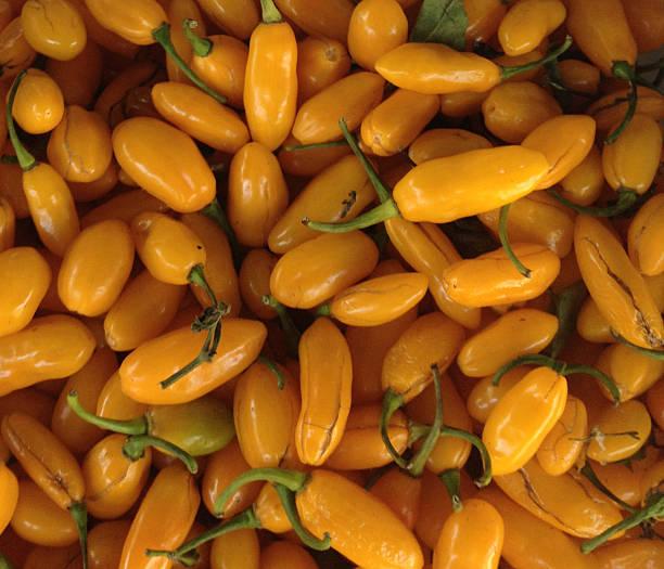 Fidalga Pepper stock photo