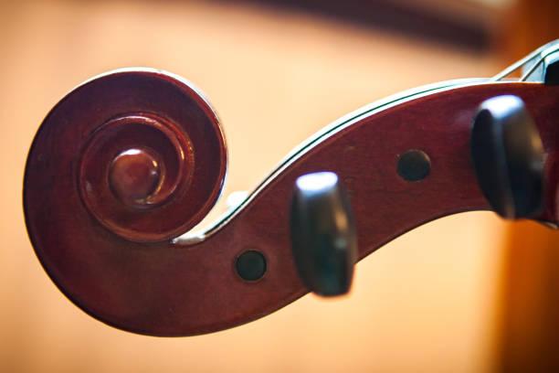 Fiddle Head stock photo