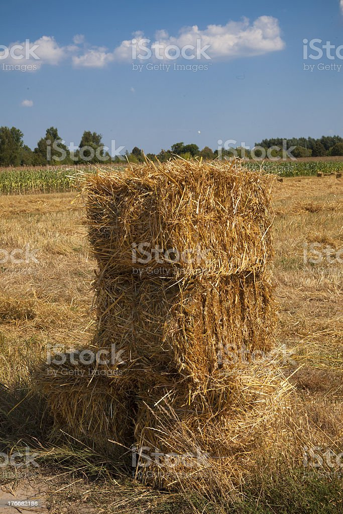 Field after harvest and blue sky royalty-free stock photo