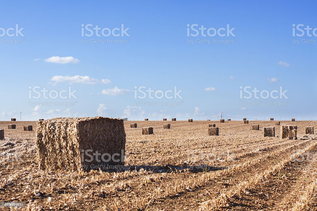 field after harvest stock photo