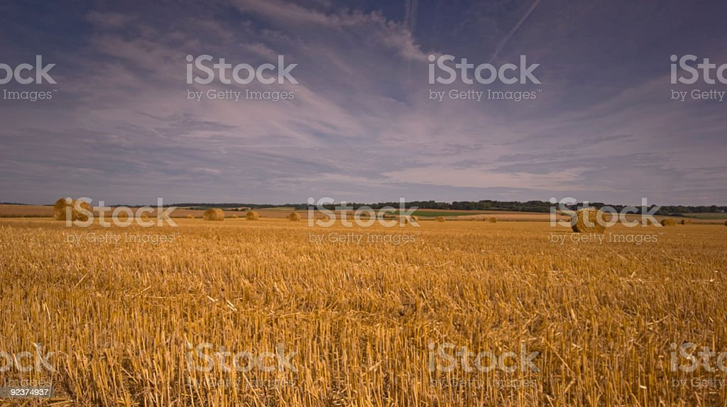 Field after harvest royalty-free stock photo