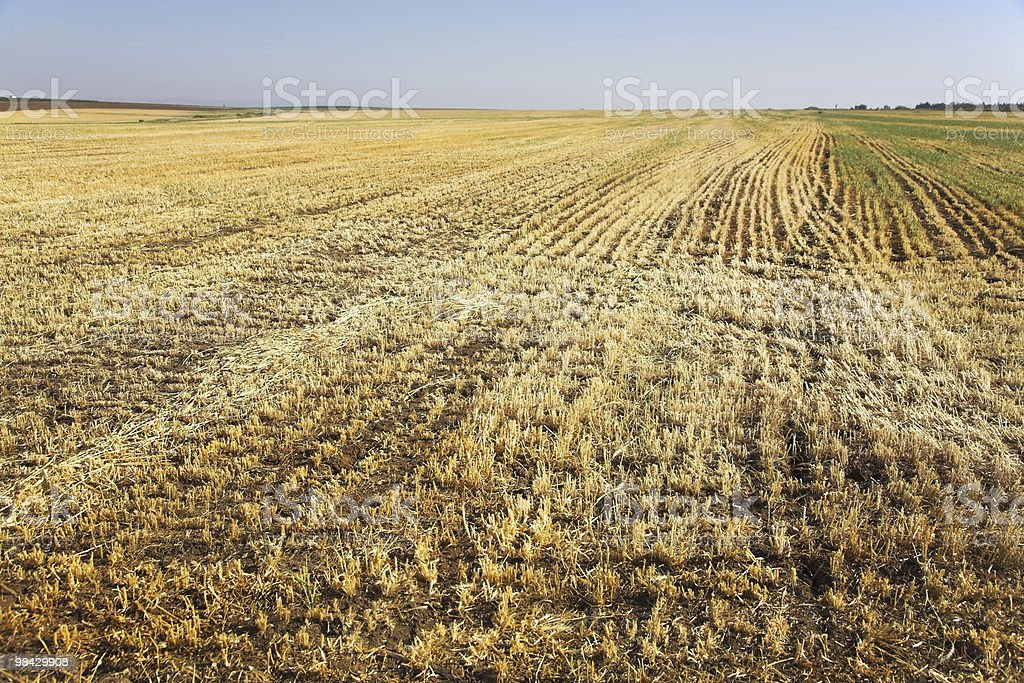Field after harvesting royalty-free stock photo