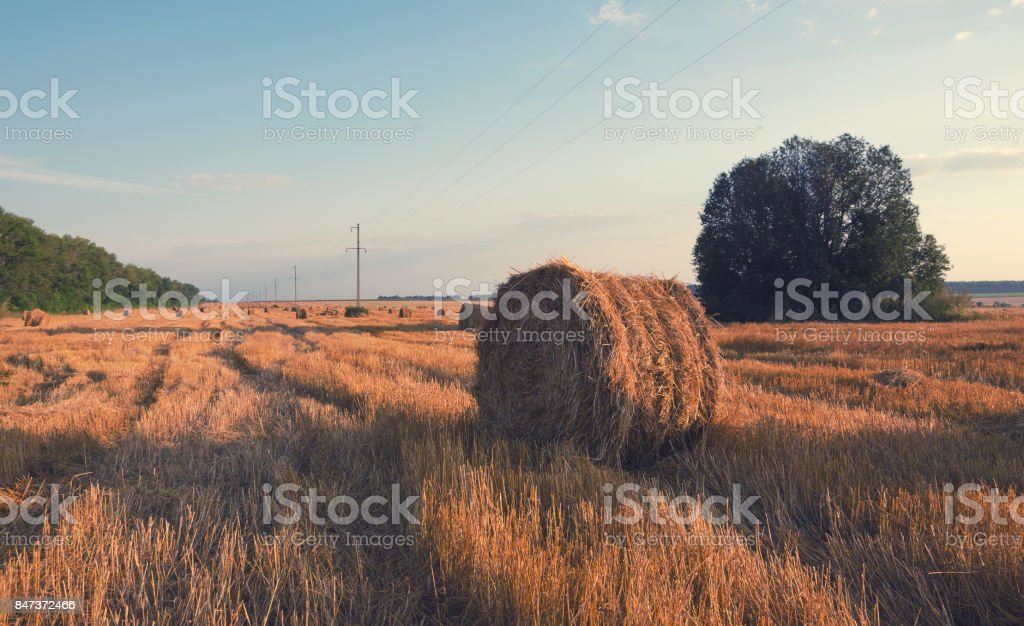Field after harvesting.Straw bales at sunrise. stock photo