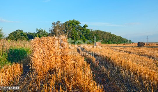 istock Field after harvesting.Straw bales at sunset.Warn sunlight.Summer countryside landscape.Agricultural industry.Concept of farming and agribusiness. 927399330
