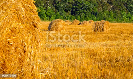 istock Field after harvesting.Straw bales at sunset.Warn sunlight.Summer countryside landscape.Agricultural industry.Concept of farming and agribusiness. 928775496