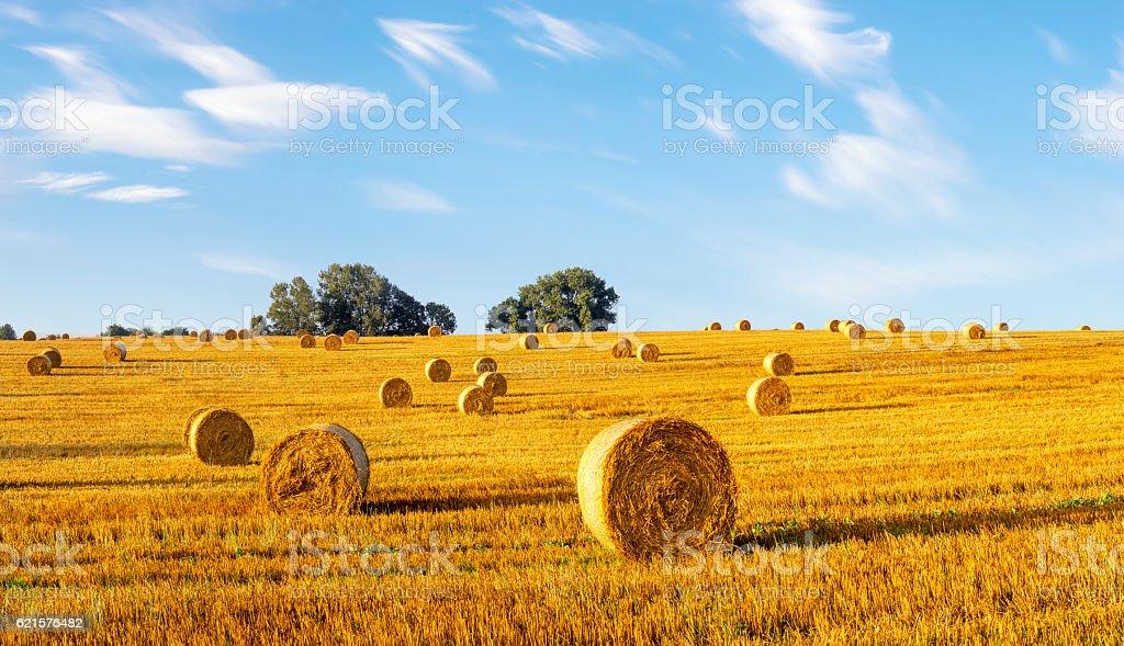 field after the harvest photo libre de droits