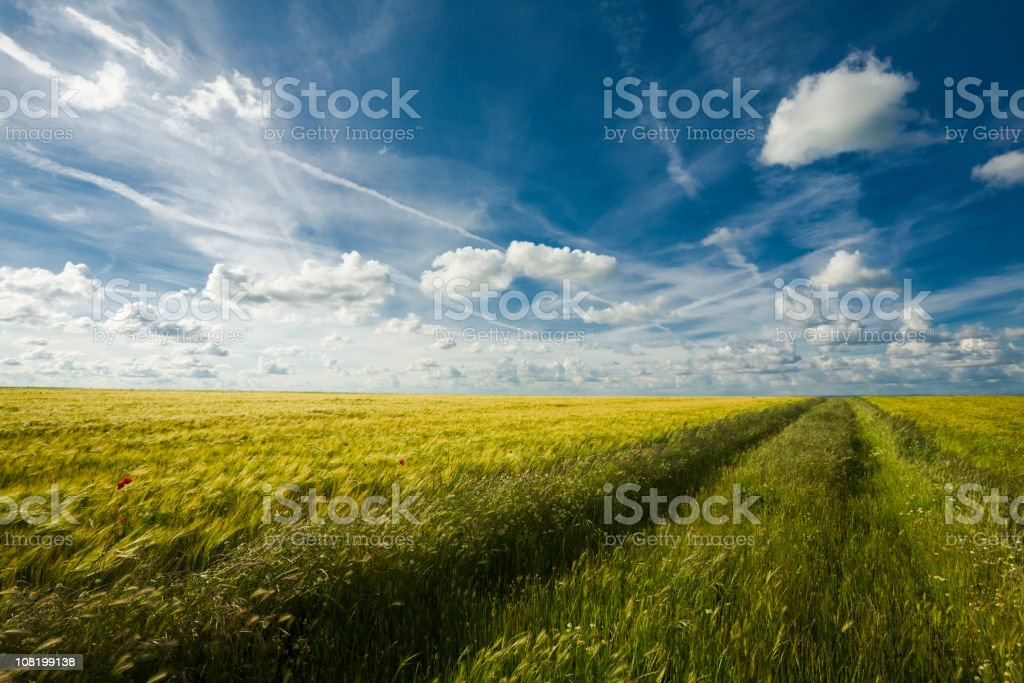 Field Against Blue Sky royalty-free stock photo