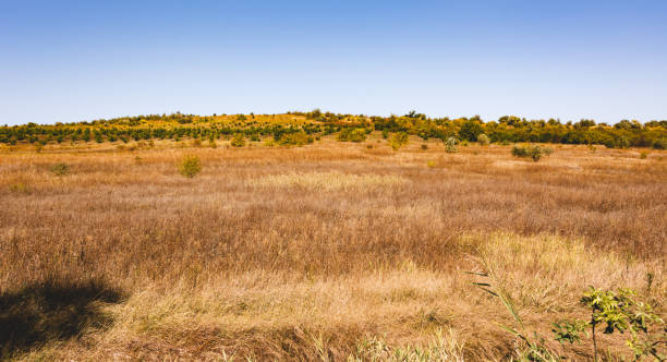 Field and blue sky. The nature of Moldova. Landscapes of Moldova. Artistic processing with copy space stock photo