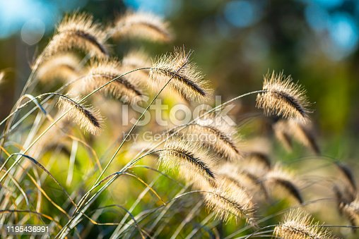 Field and green grass swaying in the wind
