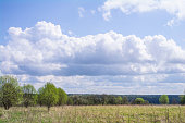 Field and lonely trees, far forest and cloudy sky.