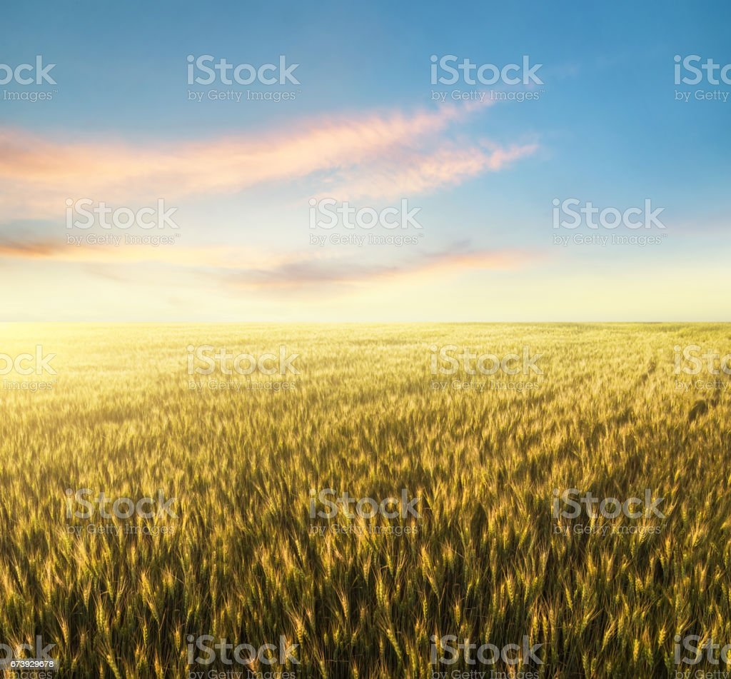 Field and sky. Beautiful natural landscape photo libre de droits