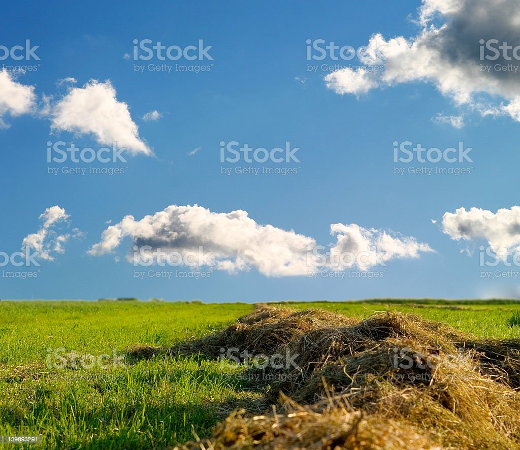 field und Himmel mit Wolken im Hintergrund – Foto
