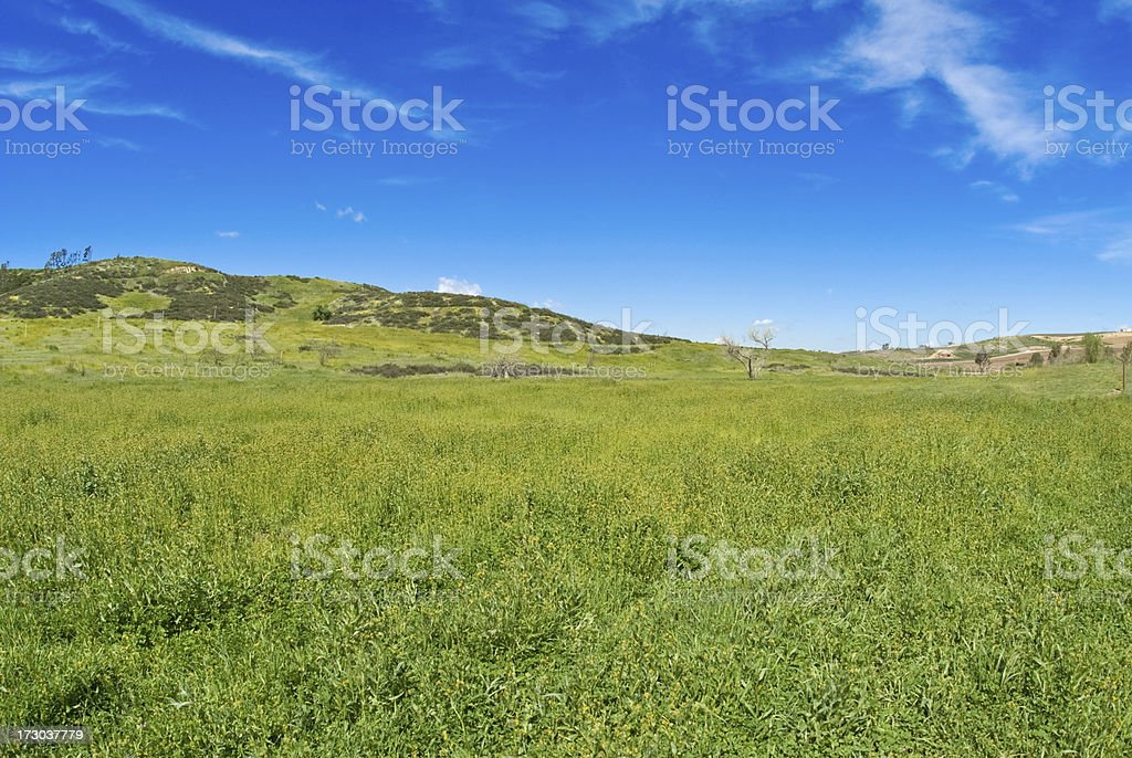 Field and Sky with Copy Space royalty-free stock photo