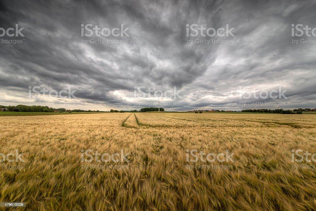 Field und Gewitter – Foto