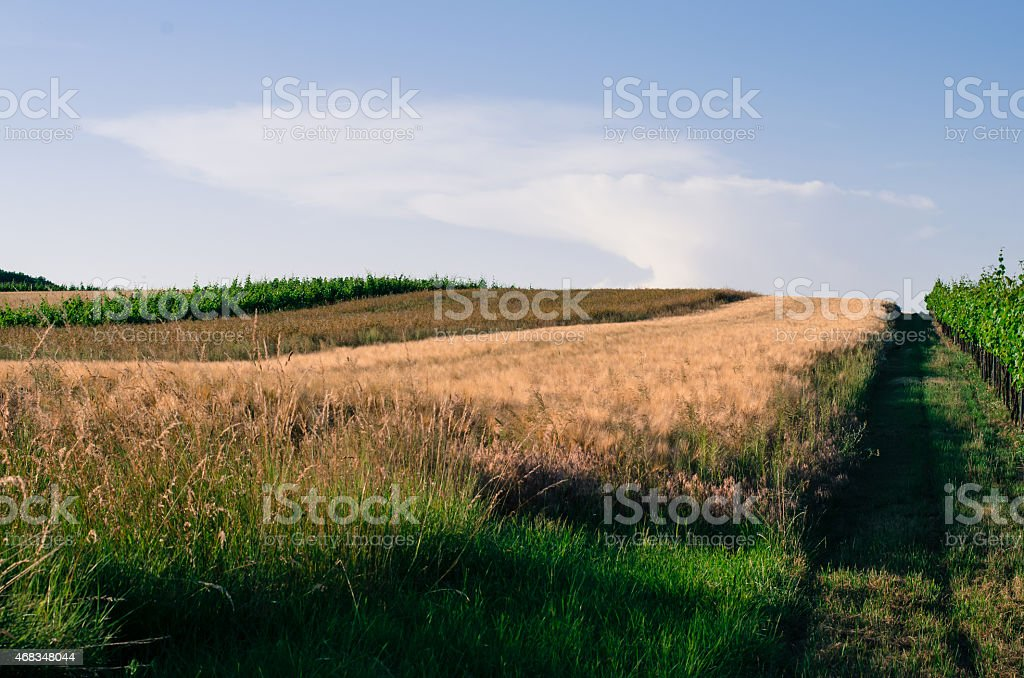 field and vineyard landscape royalty-free stock photo