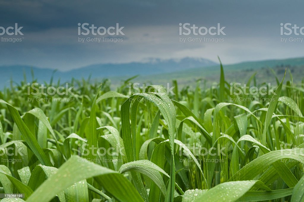 field at cloudy day royalty-free stock photo