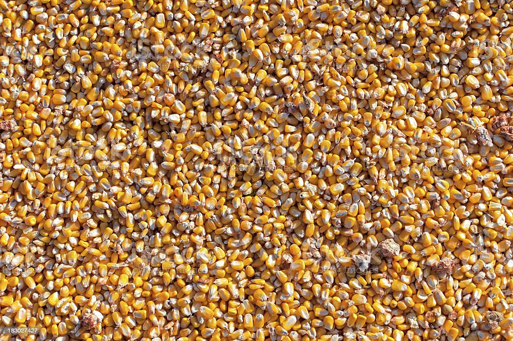Field Corn Kernel Background royalty-free stock photo