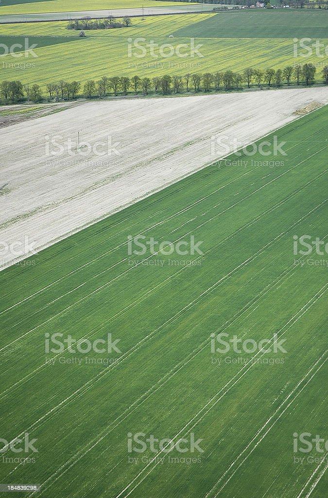 Campo de culturas - foto de acervo