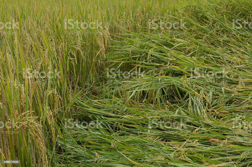 field damage background stock photo
