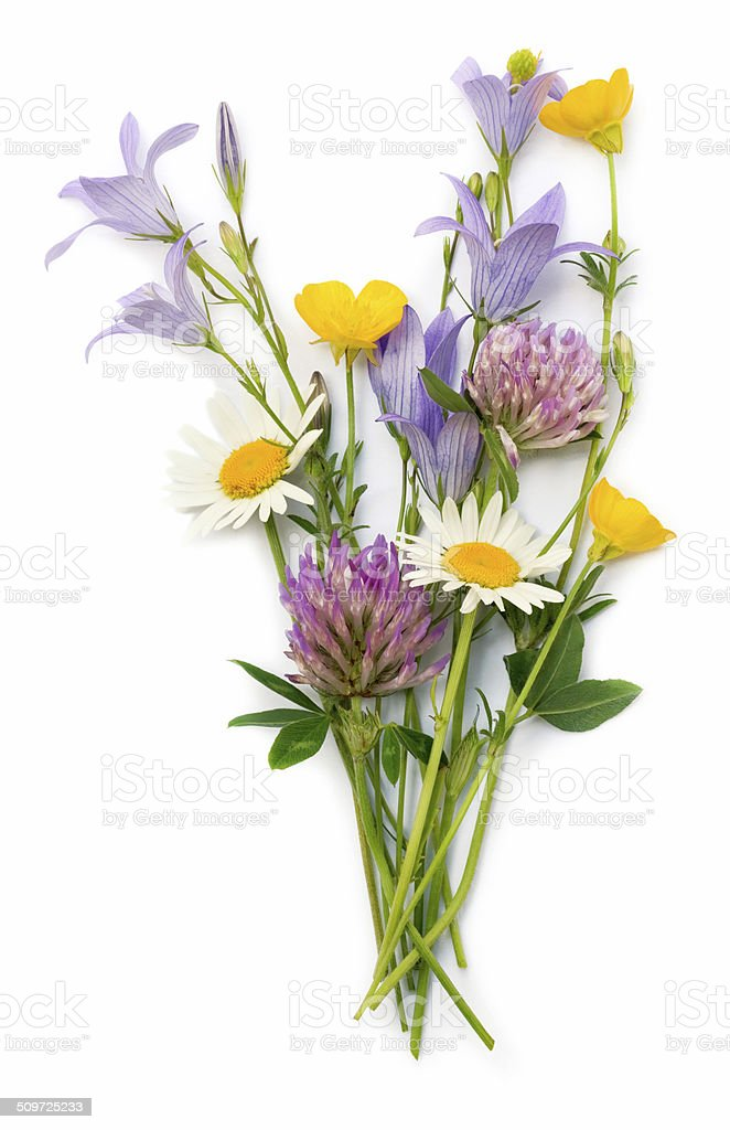 field flowers stock photo