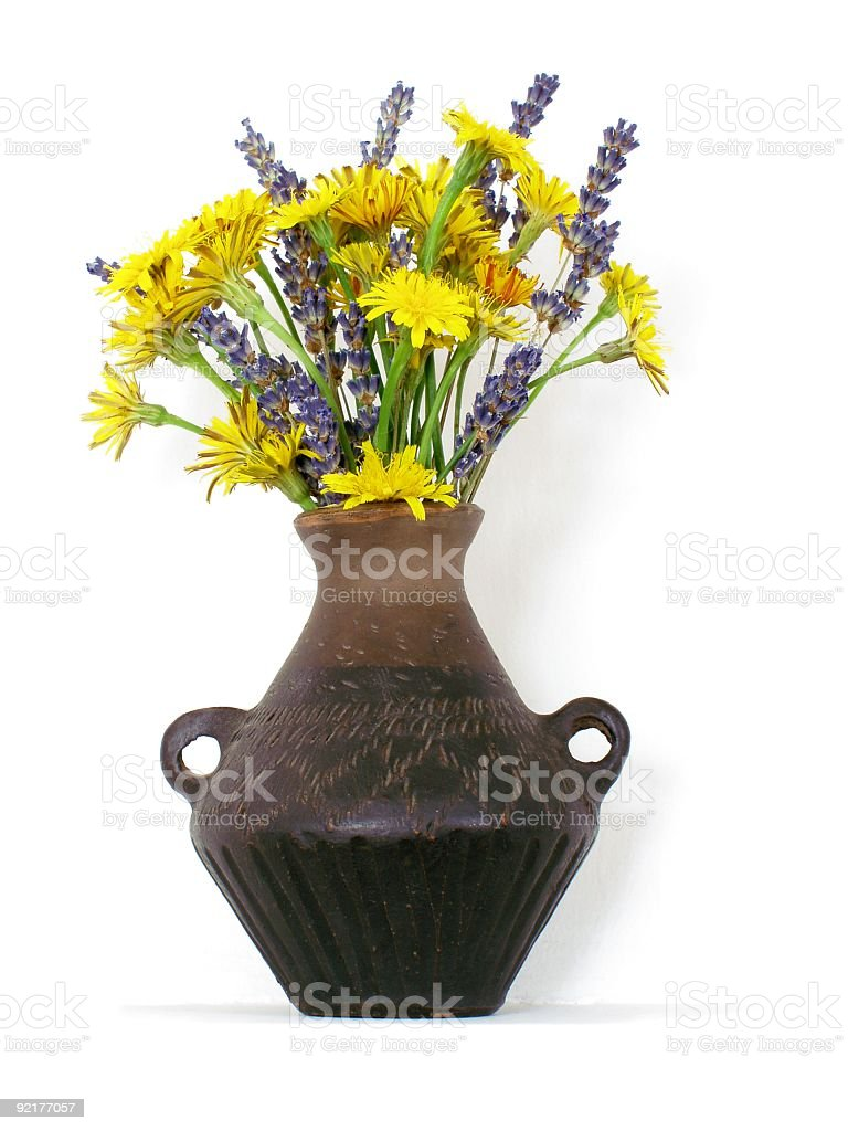 Field Flowers - Rough Hawk's-beard and Lavender royalty-free stock photo