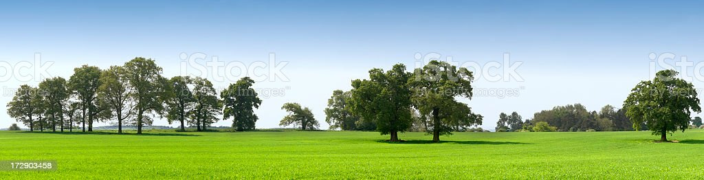 A field full of grass and multiple trees stock photo