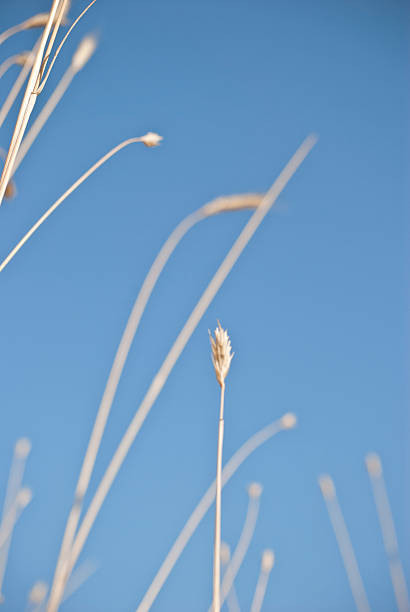 Field grass and blue sky stock photo