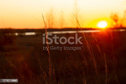 herbs against the background of the river and the setting sun.