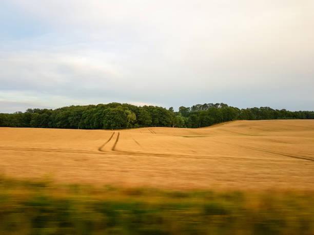 A field in Denmark – Foto