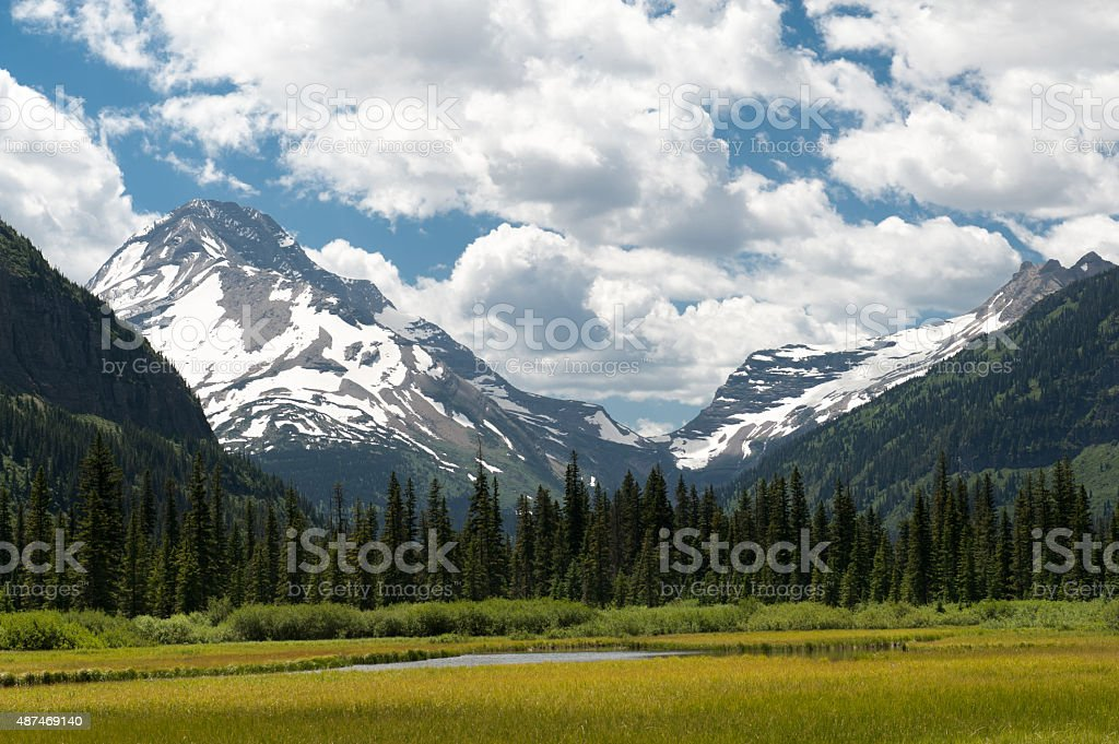 Field in Glacier National Park Montana stock photo