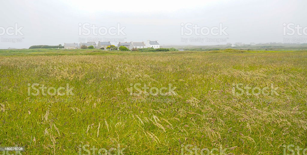 field in ouessant, brittany, france stock photo