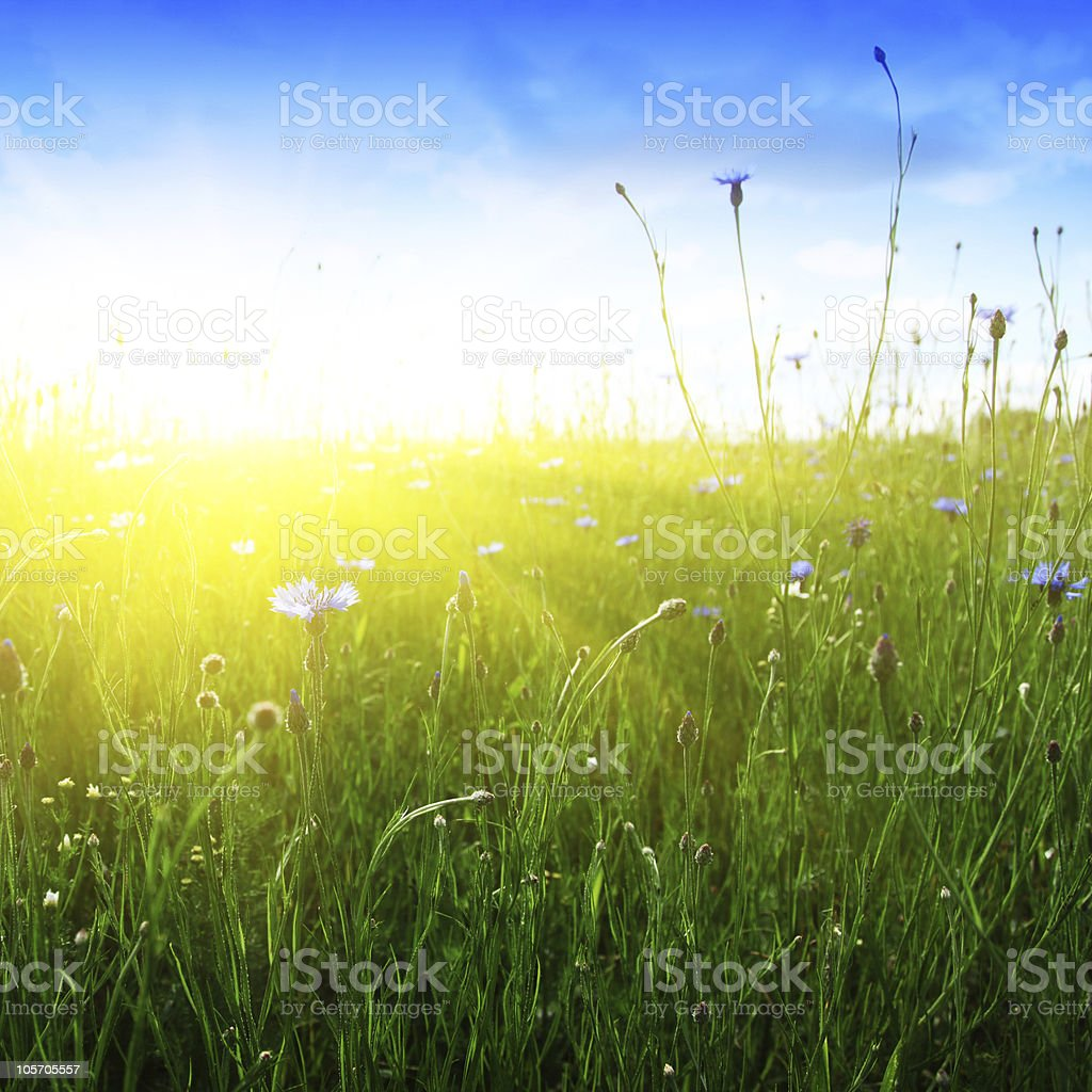 Field in rays of sunlight. stock photo
