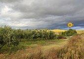 Campo de olivos y girasoles en una tarde de tormenta