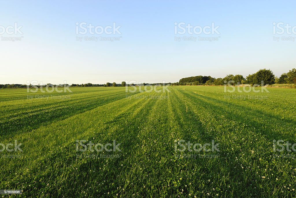 Field in summer royalty-free stock photo