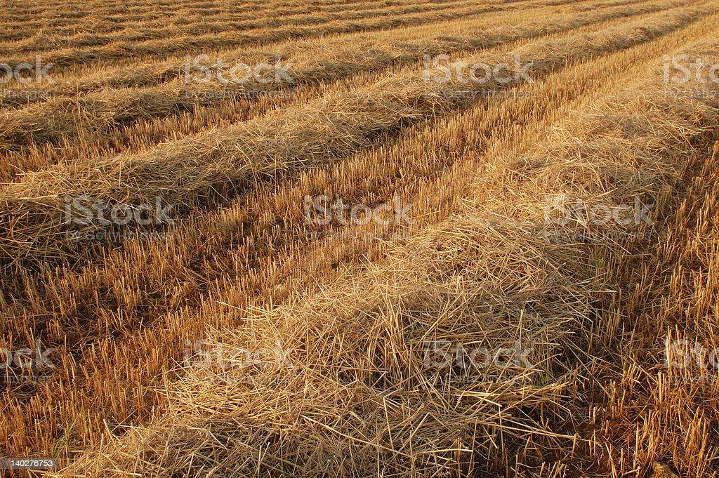 Feld im Herbst – Foto
