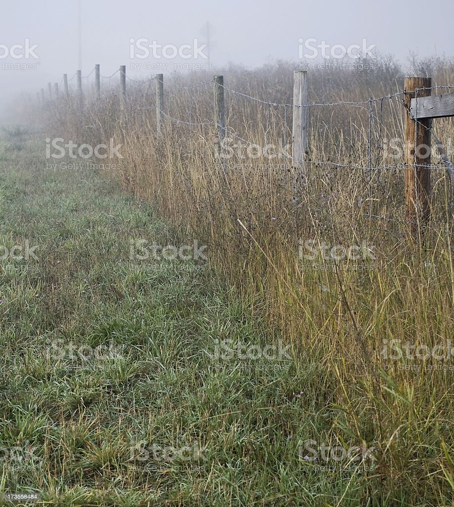 Field in the morning Fog royalty-free stock photo