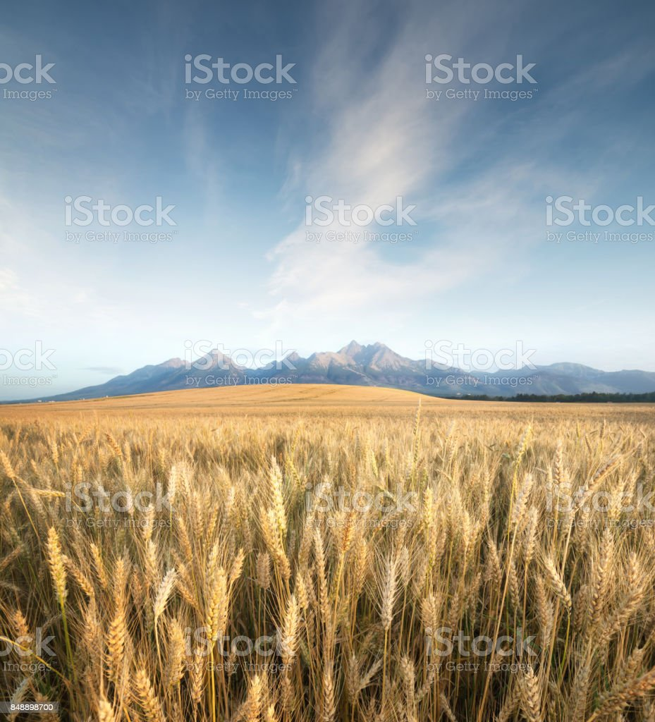 Field in the mountain valley. Agricultural landscape in the Tatry mountain, Slovakia stock photo