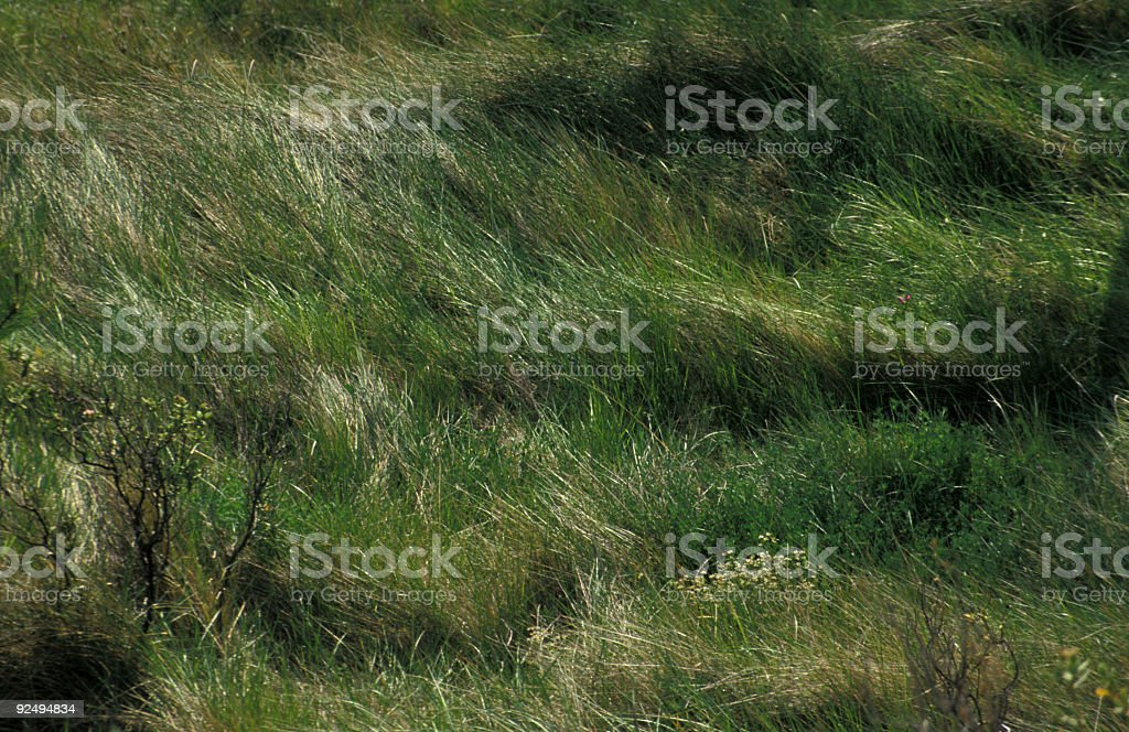 Field in the Wind royalty-free stock photo