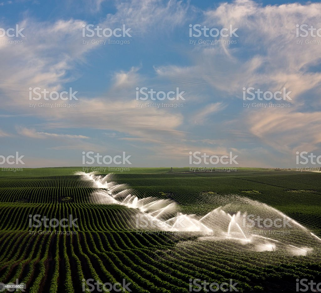 Field Irrigation royalty-free stock photo