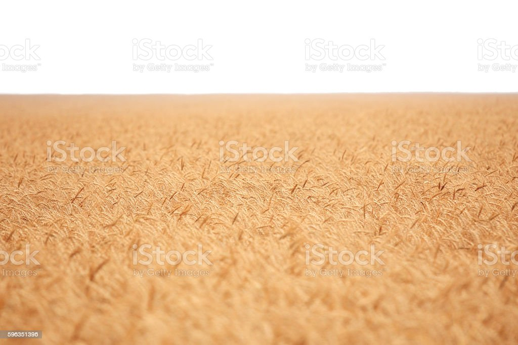 Field isolated royalty-free stock photo