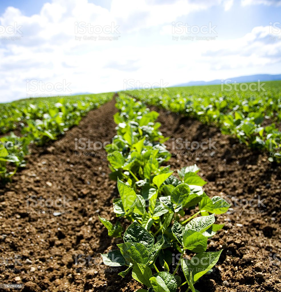 Field Landscape royalty-free stock photo