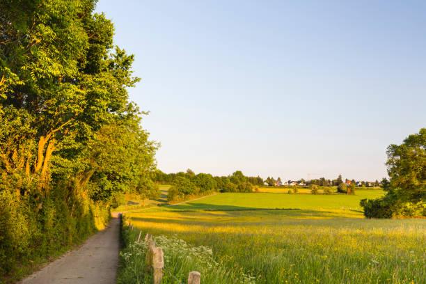 Field Lane In Warm Evening Light, Germany stock photo