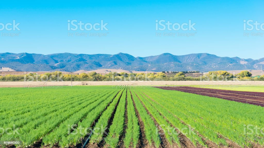 Campo de la agricultura en California. - foto de stock